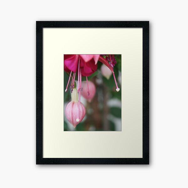 Blossom_1318 Framed Art Print