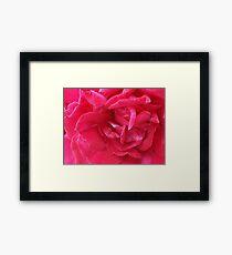 Blossom_1320 Framed Print