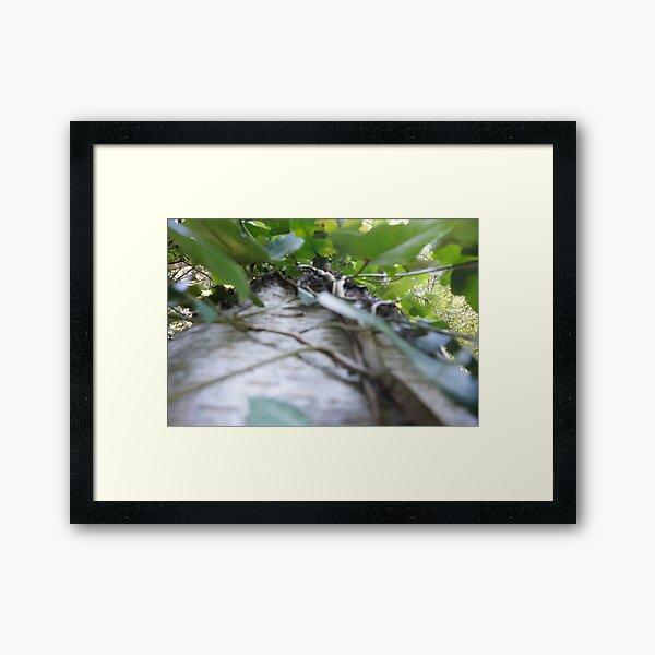 Forest_1304 Gerahmter Kunstdruck