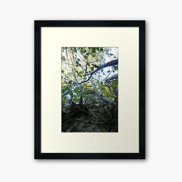 Forest_1310 Gerahmter Kunstdruck