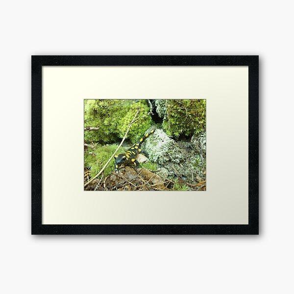 Forest_1324 Framed Art Print