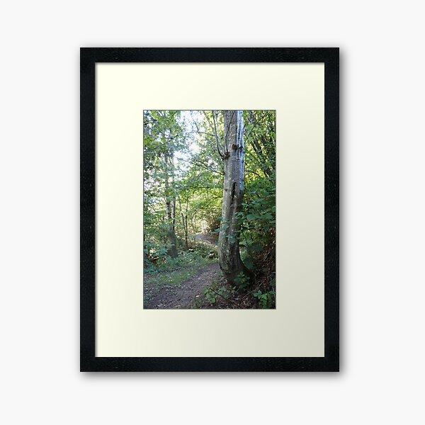 Forest_1308 Gerahmter Kunstdruck
