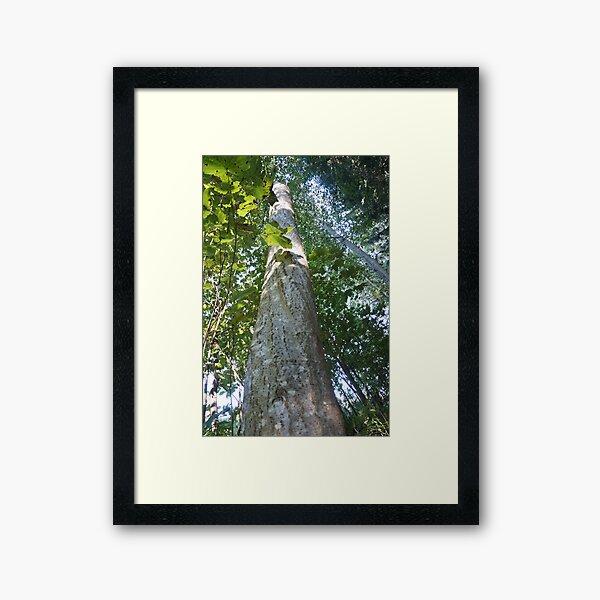 Forest_1306 Gerahmter Kunstdruck
