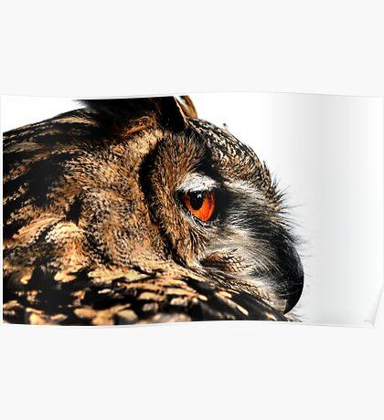 Eagle owl up close Poster