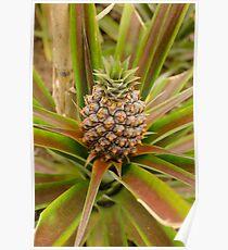 Azorean pineapple Poster