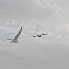 Gulls Flying High..Lyme Dorset  by lynn carter