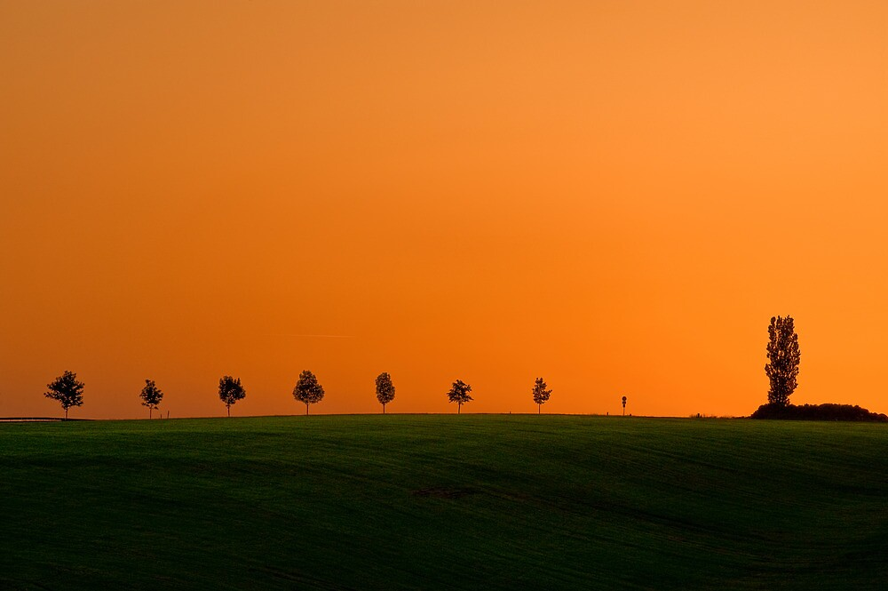 Evening summer landscape with trees by Pixmover