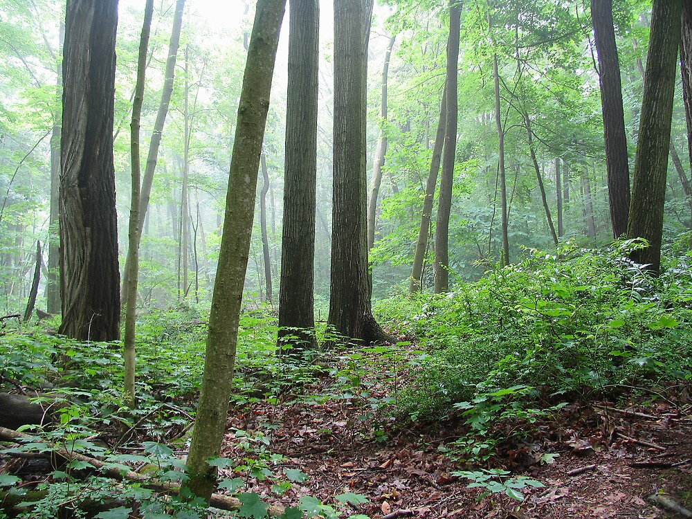 Into the Misty Wild Forest by Kathilee