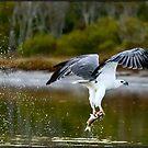 Sea Eagle  481 by John Van-Den-Broeke