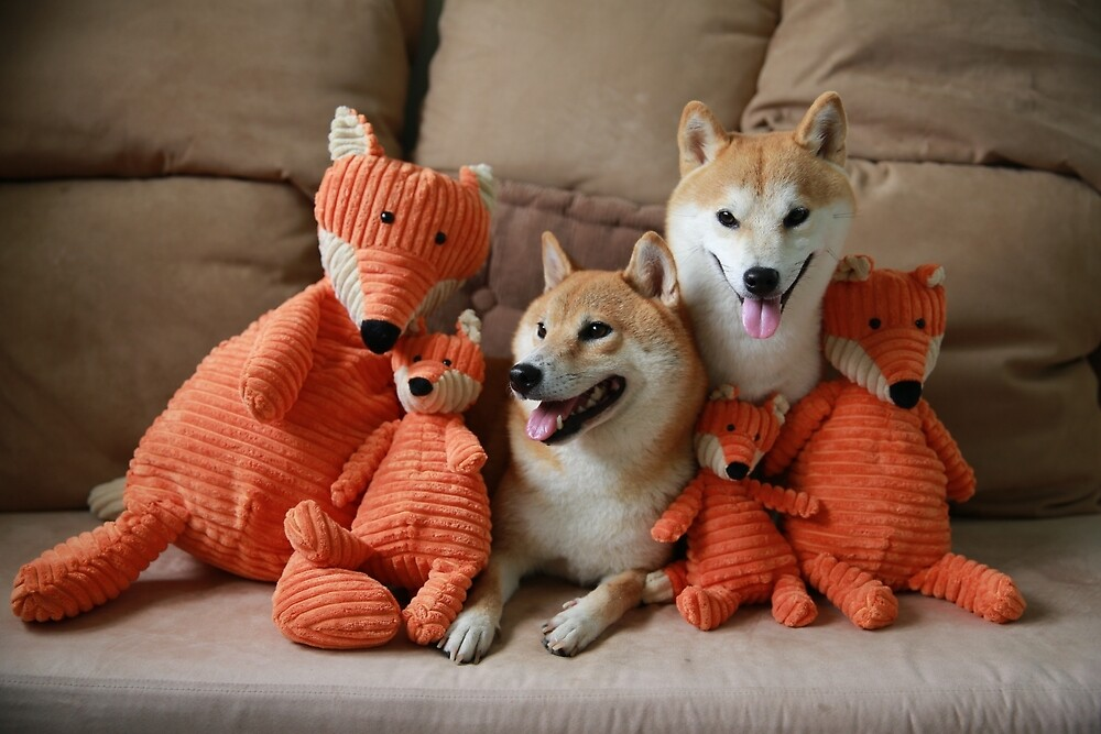 foxy team by malina