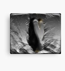 The Engraving  Canvas Print