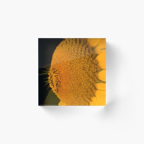 The  little tournasol By Yannis Lobaina Acrylic Block