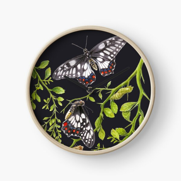 Dainty Swallowtail Butterfly Life Cycle on Native Lime - Dark Background Clock