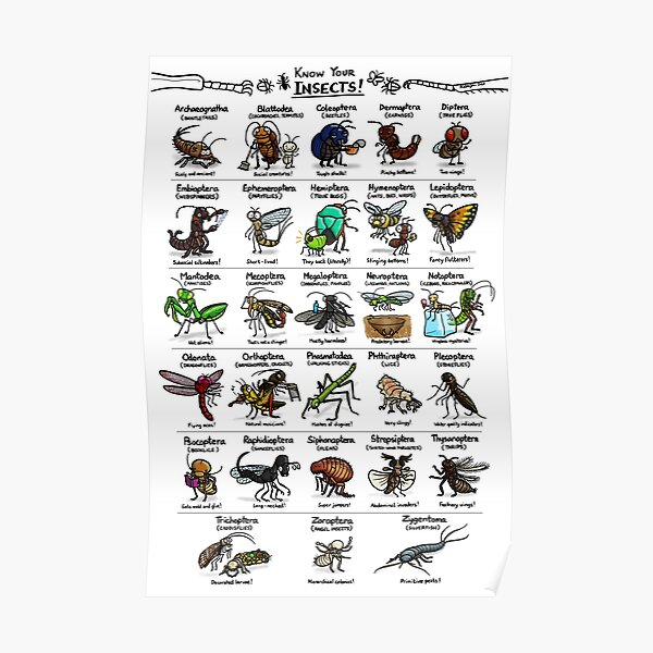 Illustrated Guide to Insects Poster