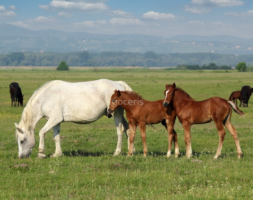 white horse and brown foals in pasture by goceris