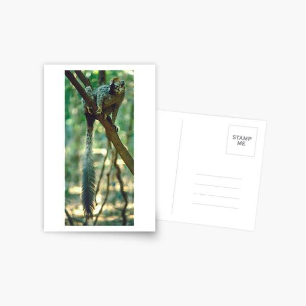 A lemur's tail Postcard