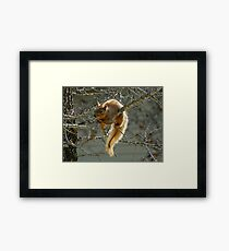 Red Robber Framed Print