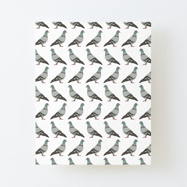pigeon walk 2020, white background Canvas Mounted Print
