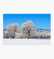 Morning After The Snowstorm Photographic Print