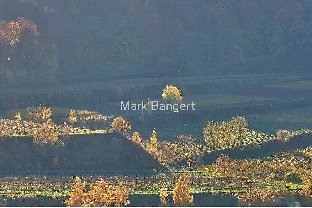 Sunlight on autumn trees, Kaiserstuhl, Germany by Mark Bangert