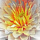 Dahlia Flower from Dark to Bright von Terri Chandler