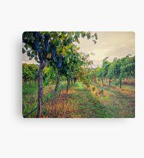 Vineyard Colours Metal Print