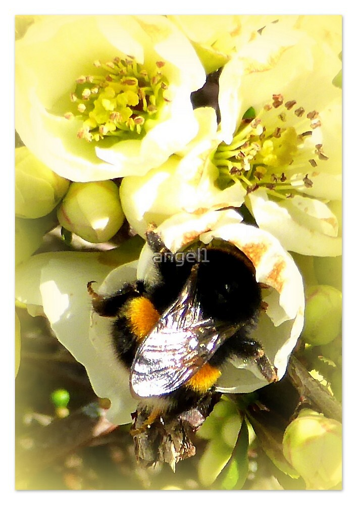 Hungry Bumble Bee by ©The Creative  Minds
