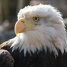 Bald Eagle profile 01 by cadman101
