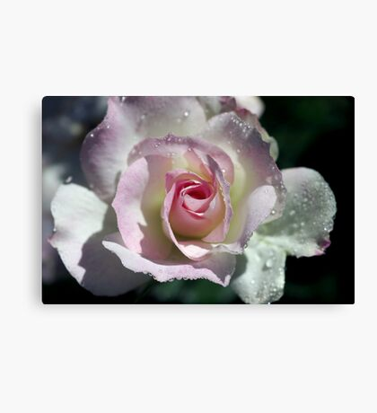 A little bit of Seduction never hurt anyone Canvas Print