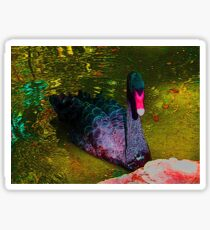 Brilliant, beautiful Black Swan Sticker