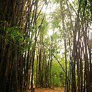 Bamboo Garden by mark thompson