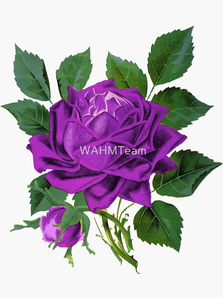 Purple Rose,Purple Flower by WAHMTeam