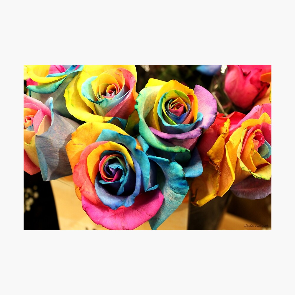 Colorido ramo de rosas del arco iris Lámina fotográfica