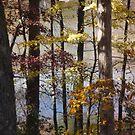 Dabs of light, autumn view by nealbarnett