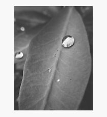 Drops Photographic Print