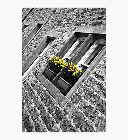 Spring Window Box Photographic Print