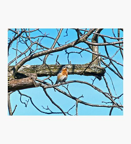 Spring Bluebird Photographic Print