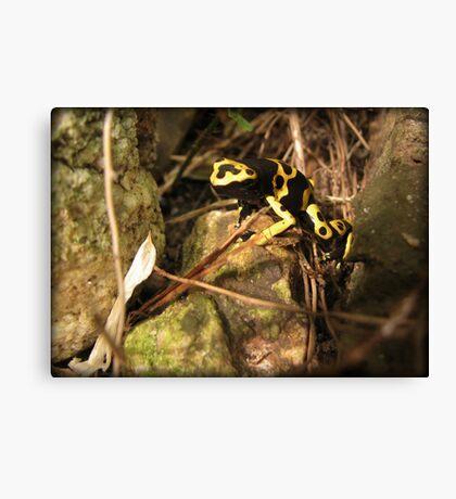 Yellow-banded Dart Frog Canvas Print