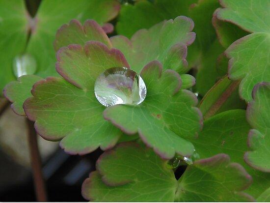 Rain drops by Phase-Duskclaw