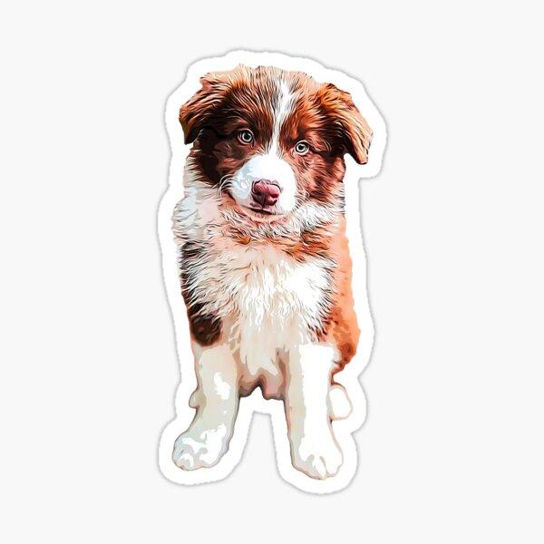 Border Collie Cute Chocolate Puppy Dog Sticker