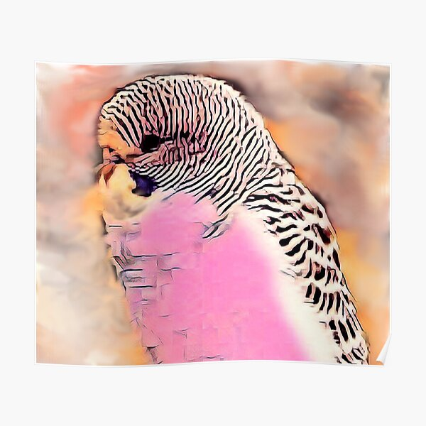 Feathered Budgies For Bird Lovers Poster