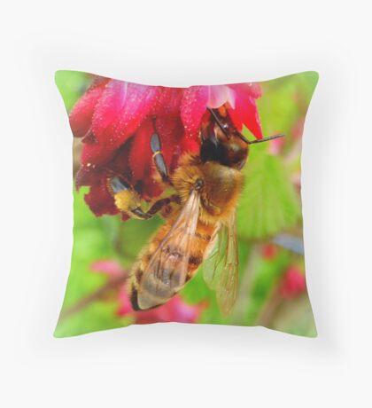 Bee on Jostaberry flower Throw Pillow
