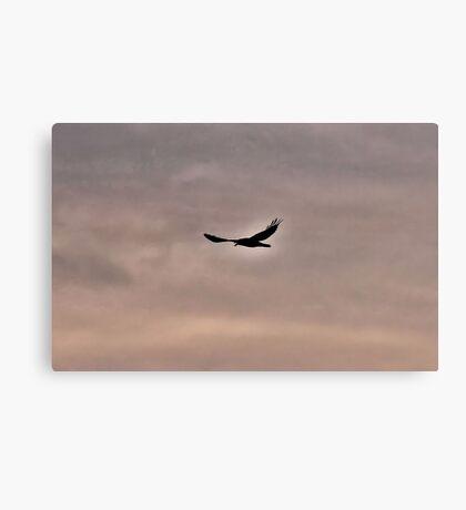 Raven Guide Canvas Print