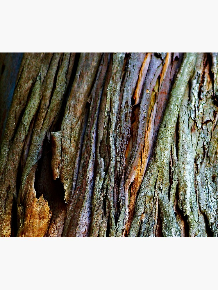 Eucalyptus Tree Bark and Wood Texture 19 by oknoki