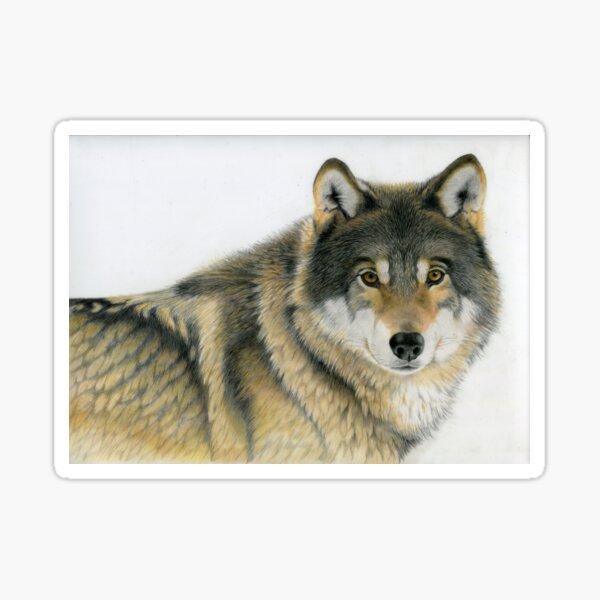 Grey Wolf Sticker