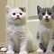 Kittens and Cubs