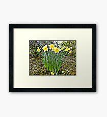 Spring of nature... Framed Print