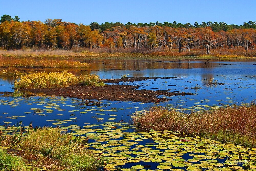 Lower Lake Lafayette in North Florida by AbbyZ