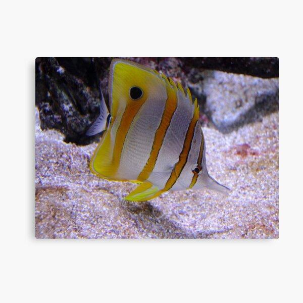 Little Yellow Fishy Canvas Print