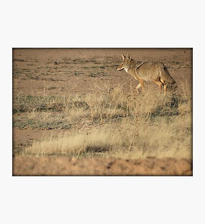 Coyote Watch Photographic Print